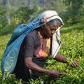 3 semaines au Sri Lanka - voyage participatif